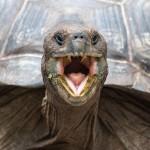 Galapagos aout 2012